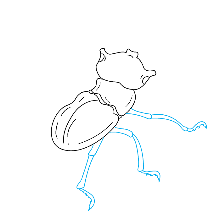 How to Draw Beetle: Step 5