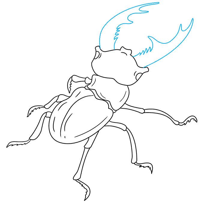 How to Draw Beetle: Step 7