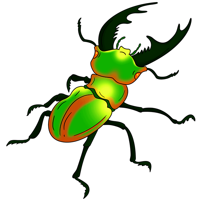 How to Draw Beetle: Step 10