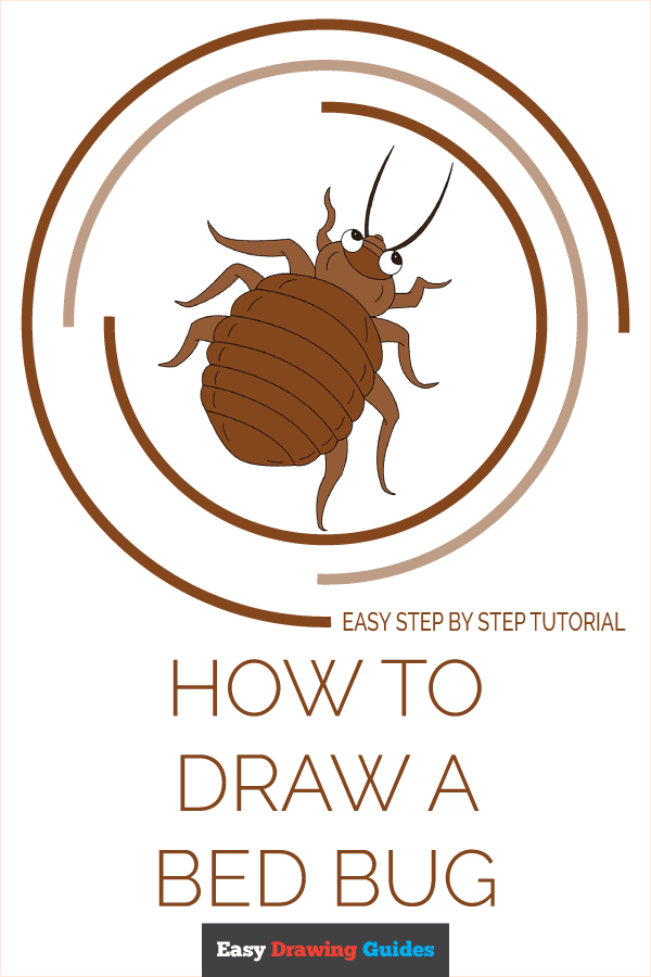 How to Draw Bed Bug   Share to Pinterest