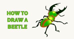 How to Draw a Beetle Featured Image
