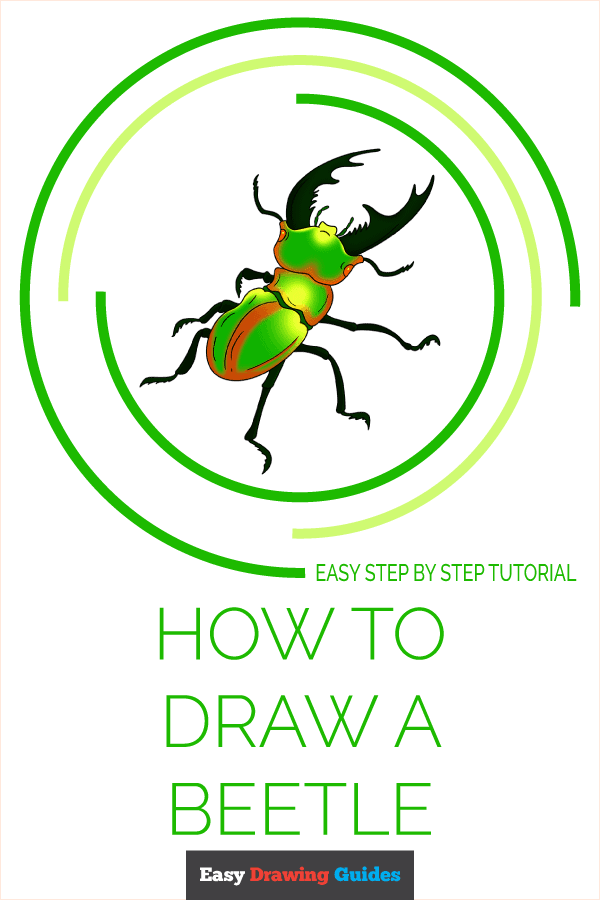 How to Draw Beetle | Share to Pinterest