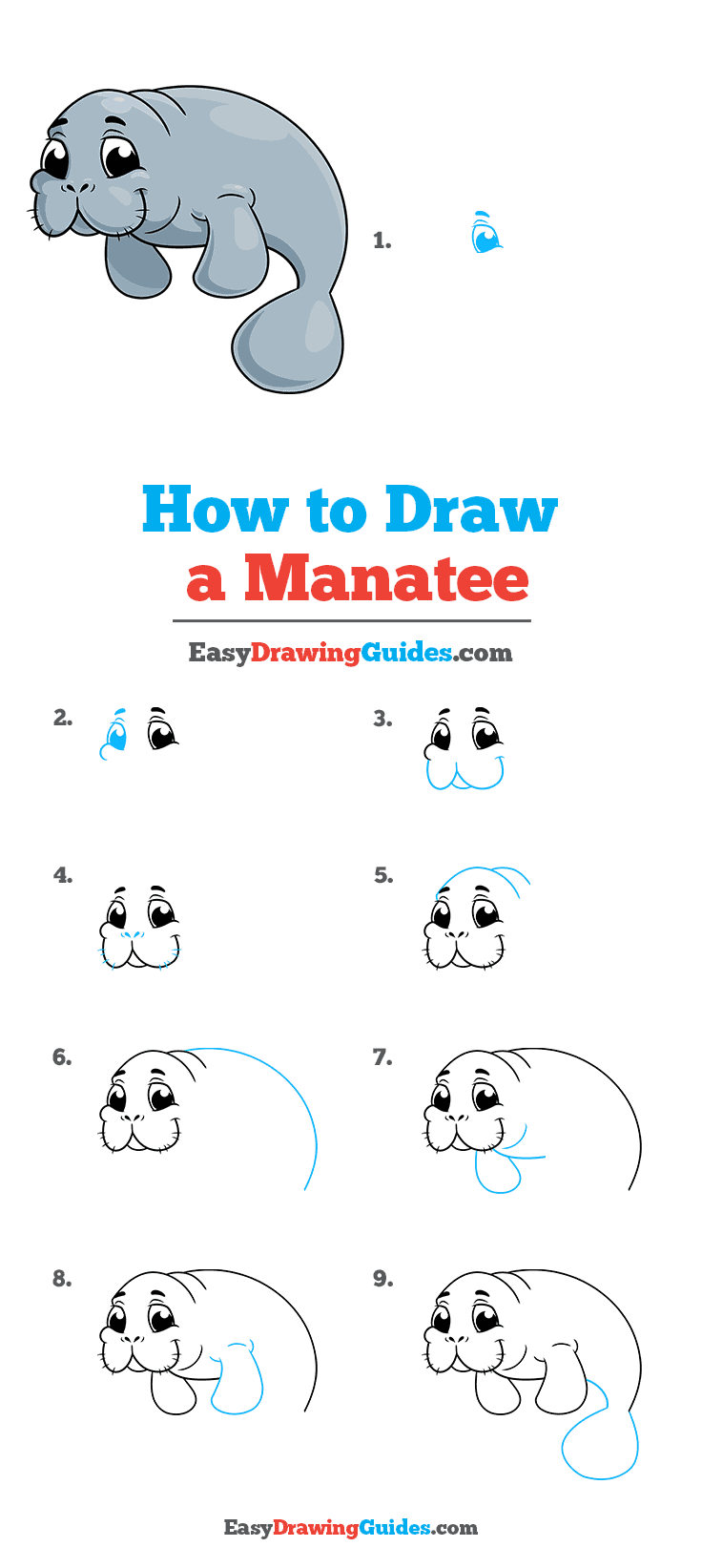 How to Draw Manatee