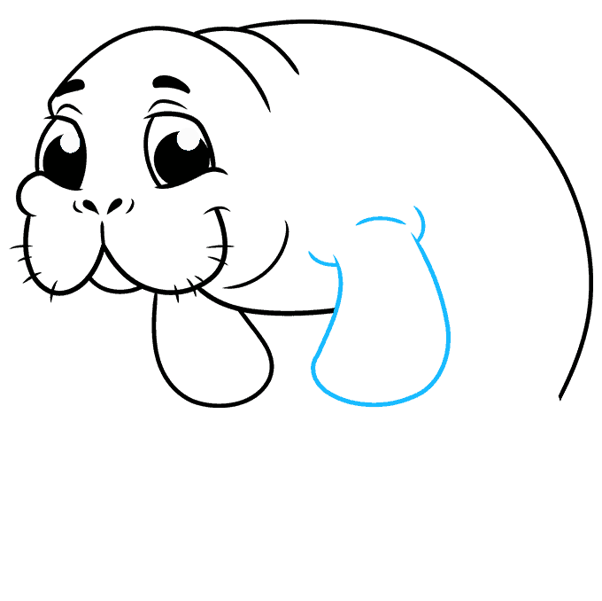 How to Draw Manatee: Step 8