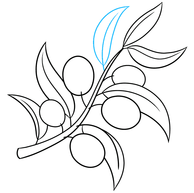 How to Draw Olive Branch: Step 8