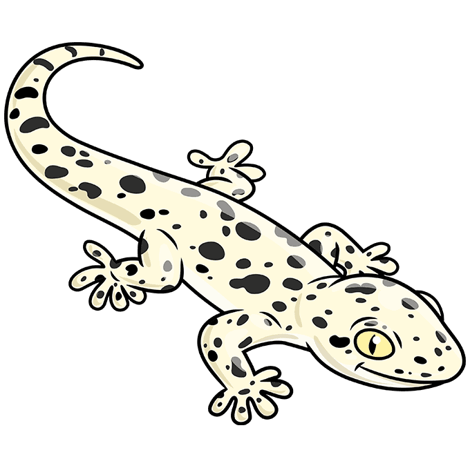 How to Draw a Gecko Step 10