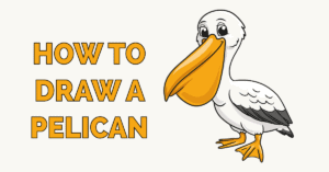 How to Draw a Pelican Featured Image