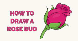 How to Draw a Rose Bud Featured Image
