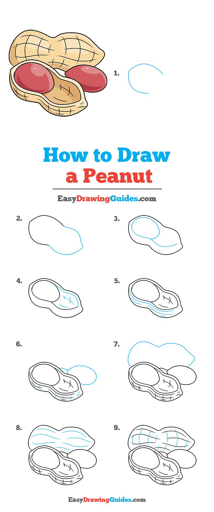 How to Draw Peanut