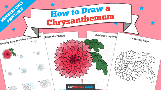 download a printable PDF of Chrysanthemum drawing tutorial