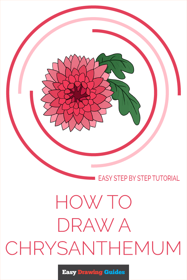 How to Draw Chrysanthemum | Share to Pinterest