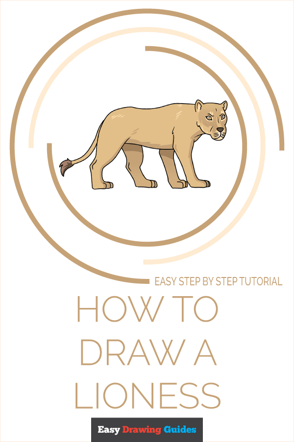 How to Draw Lioness | Share to Pinterest