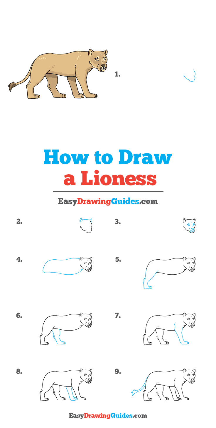 How to Draw Lioness