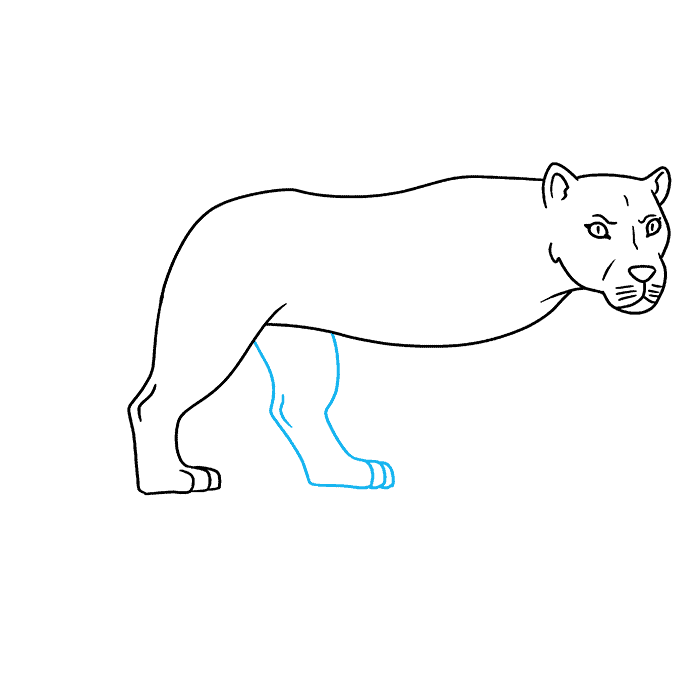 How to Draw Lioness: Step 6