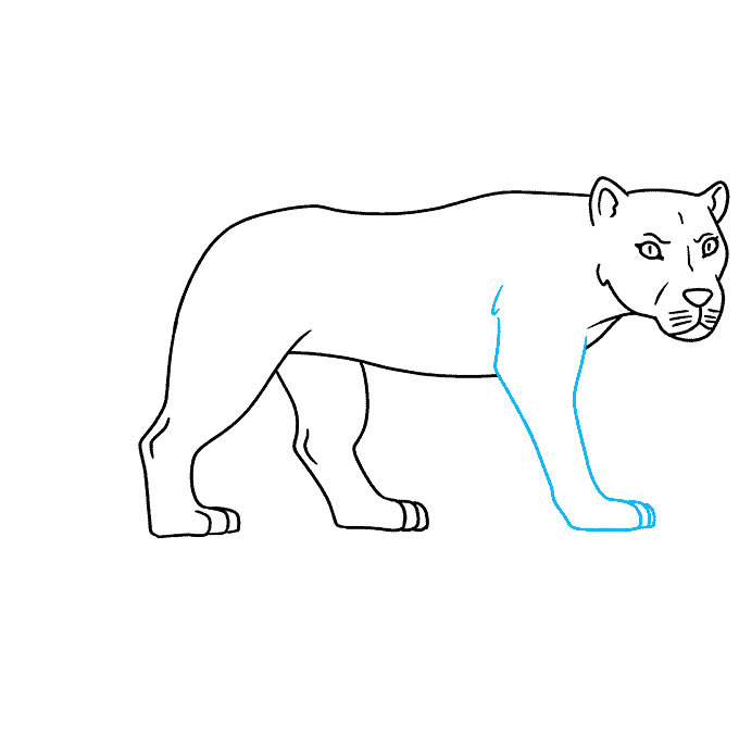 How to Draw Lioness: Step 7