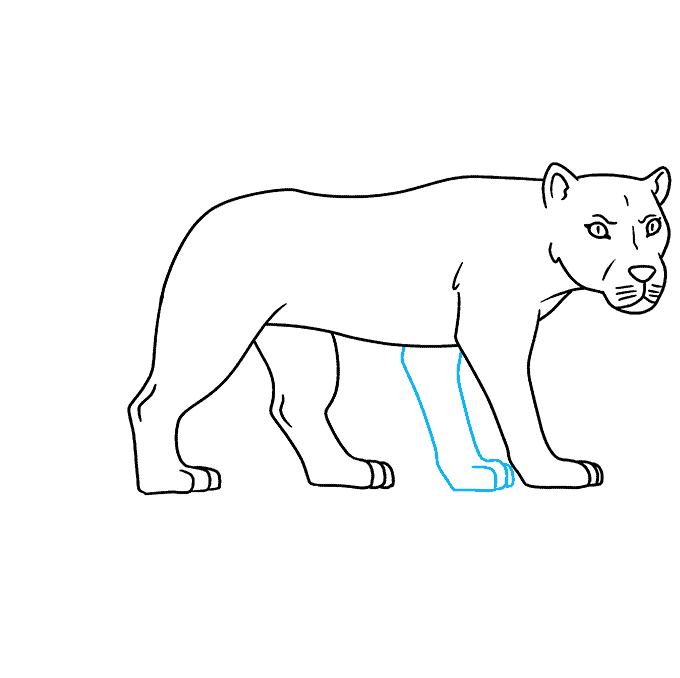 How to Draw Lioness: Step 8