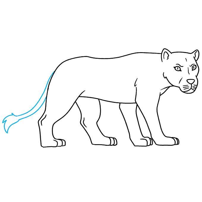How to Draw Lioness: Step 9
