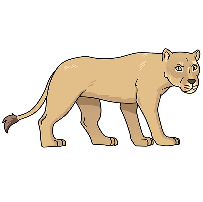 How to Draw Lioness: Step 10