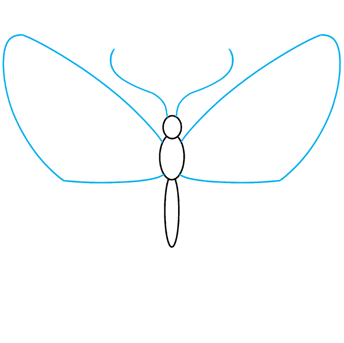 How to Draw Monarch Butterfly: Step 2