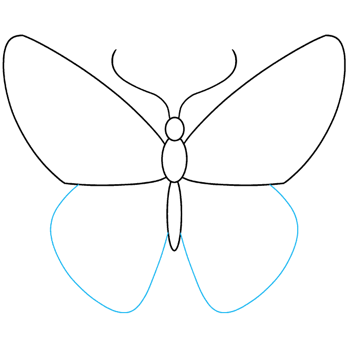 How to Draw Monarch Butterfly: Step 3