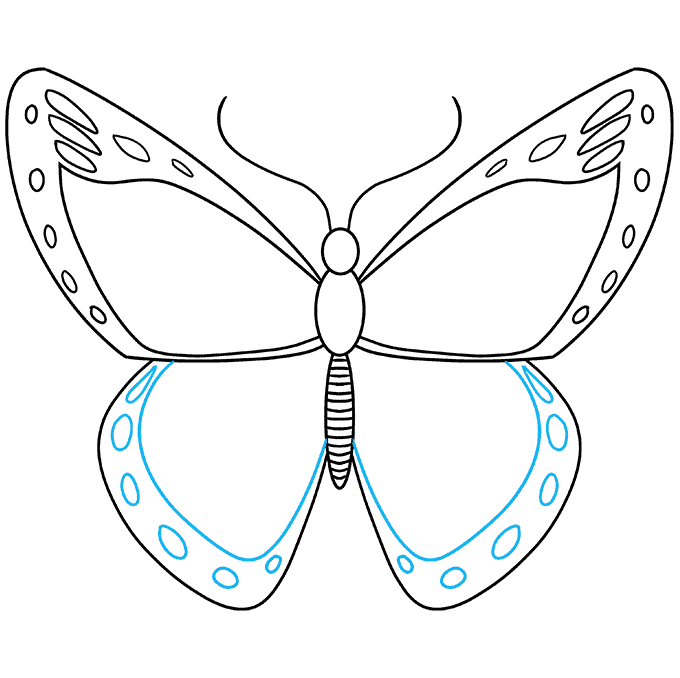How to Draw Monarch Butterfly: Step 6