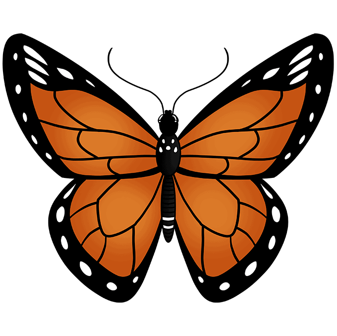 How to Draw Monarch Butterfly: Step 10