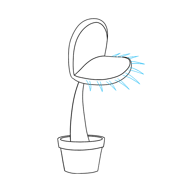 How to Draw a Venus Flytrap Step 05