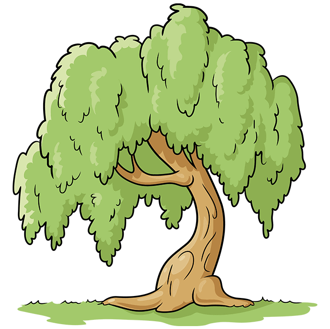 How to Draw a Willow Tree Step 10