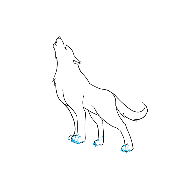 How to Draw a Wolf Howling Step 07
