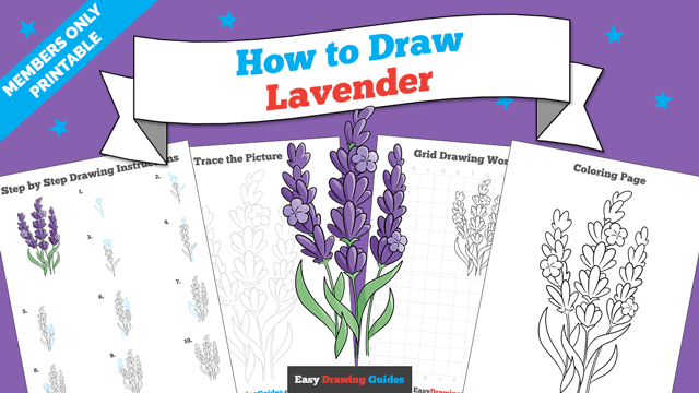 download a printable PDF of Lavender drawing tutorial