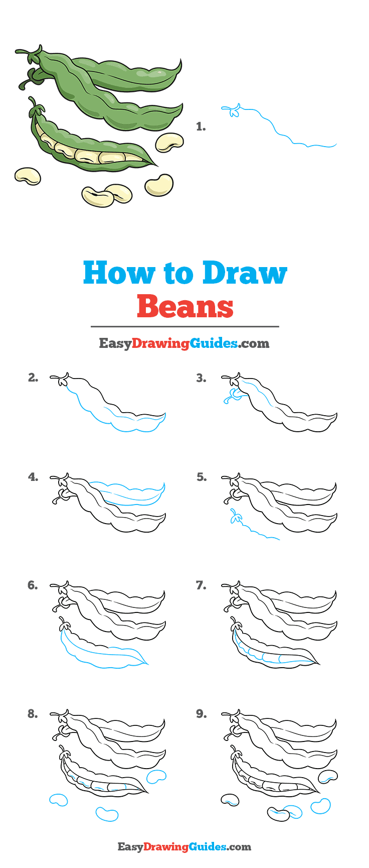 How to Draw a Beans Step by Step Tutorial Image