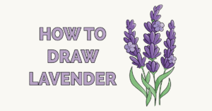 How to Draw Lavender Featured Image