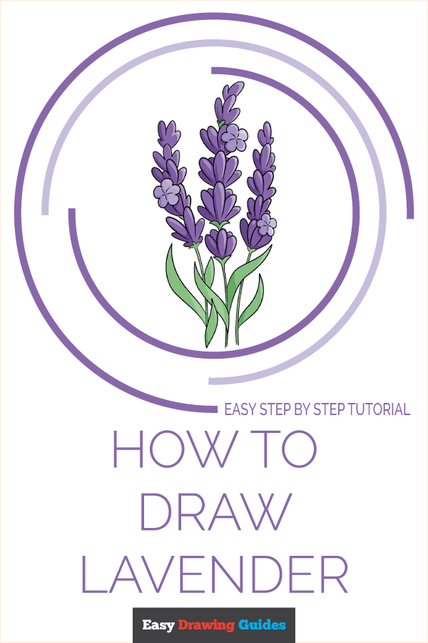 How to Draw Lavender | Share to Pinterest