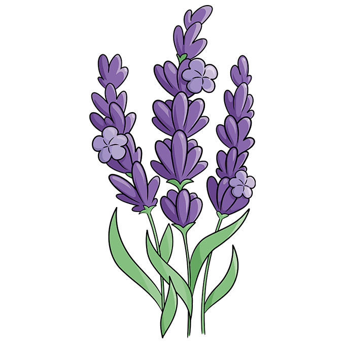 How to Draw Lavender: Step 10