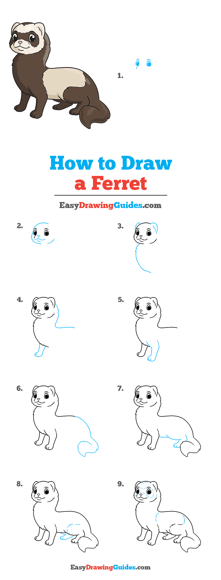 How to Draw a Ferret Step by Step Tutorial Image