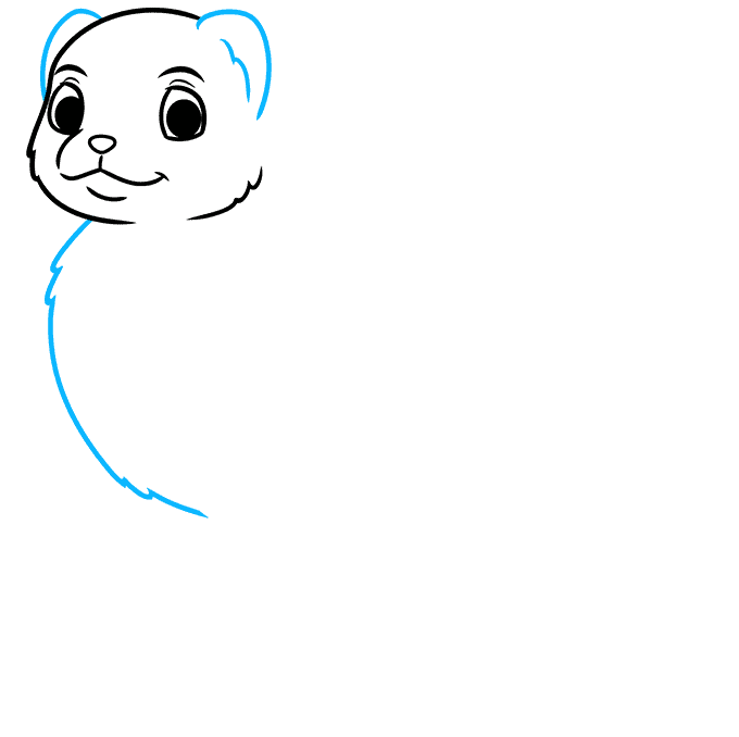 How to Draw a Ferret Step 03