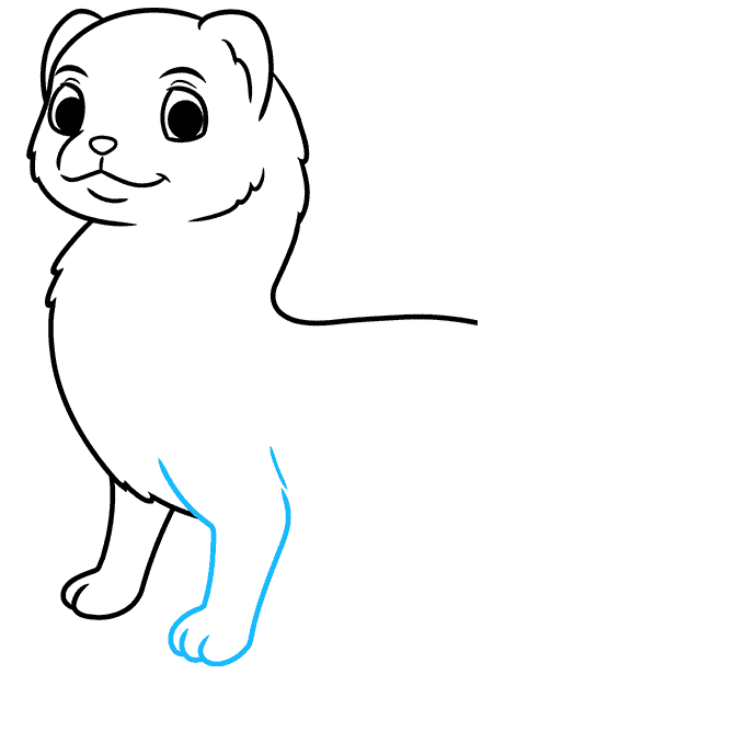 How to Draw a Ferret Step 05
