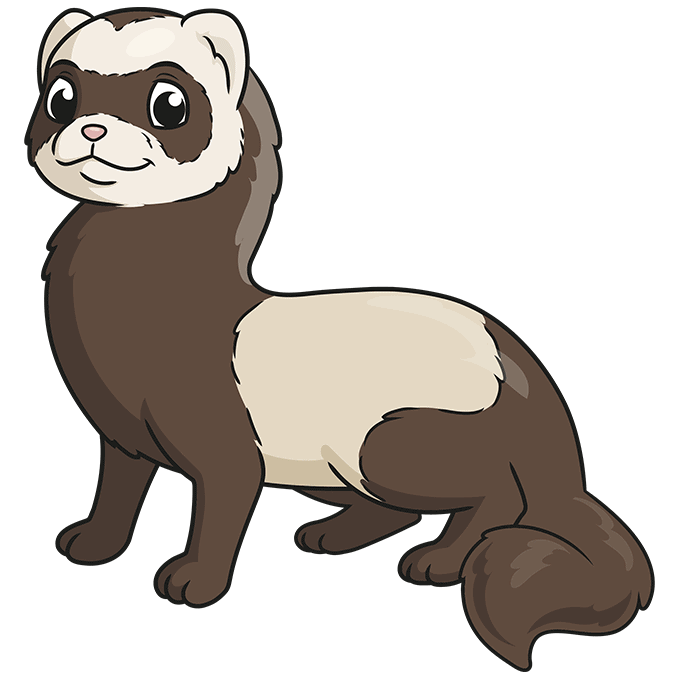 How to Draw a Ferret Step 10