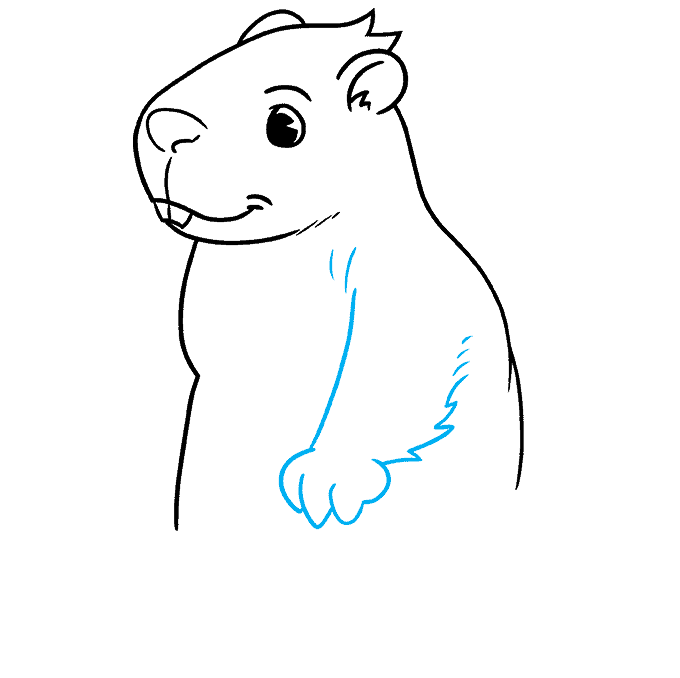 How to Draw a Groundhog Step 05