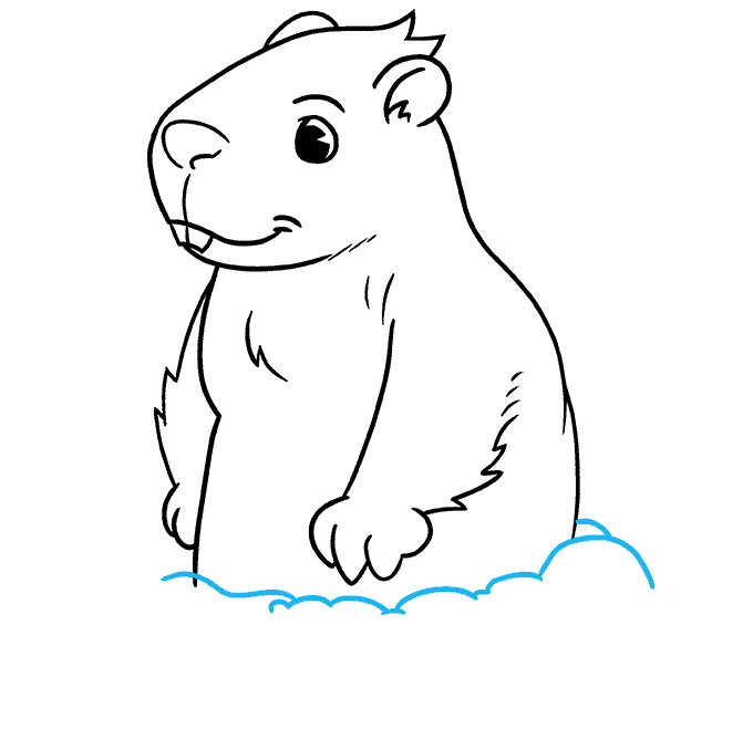 How to Draw Groundhog: Step 7