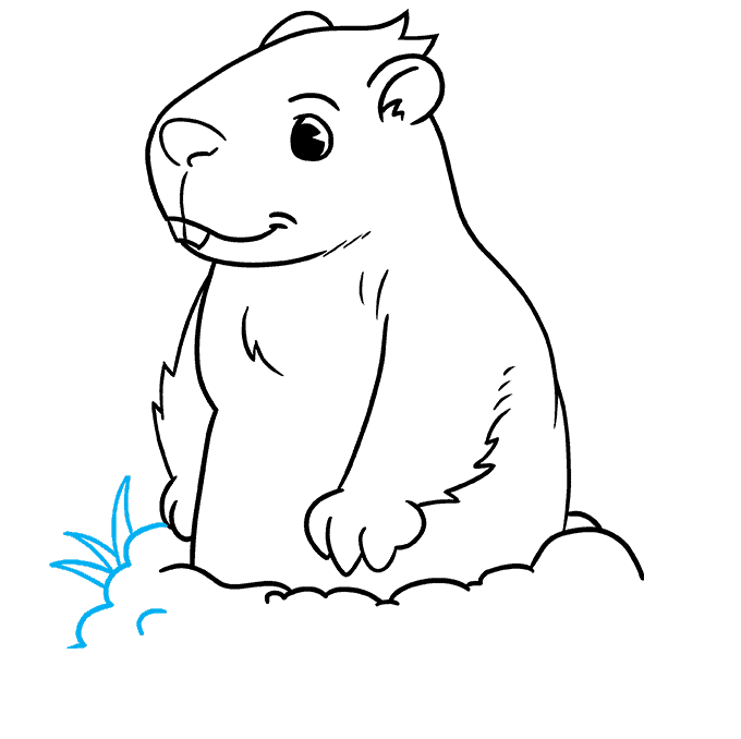 How to Draw a Groundhog Step 08