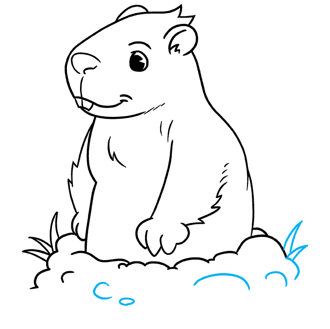 How to Draw a Groundhog Step 09