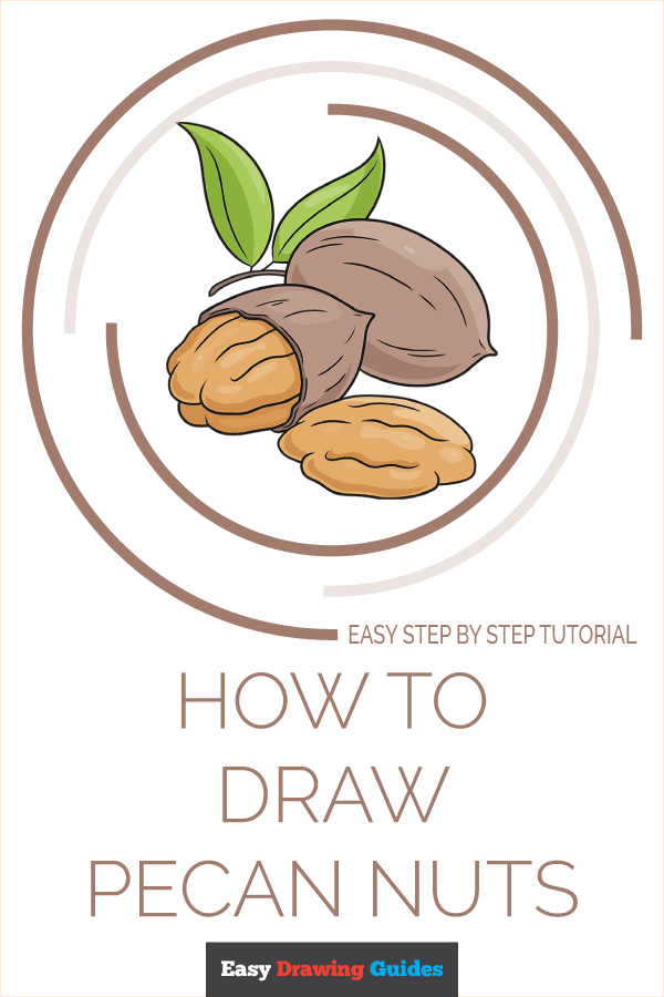 How to Draw Pecan Nuts Pinterest Image