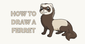 How to Draw a Ferret Featured Image