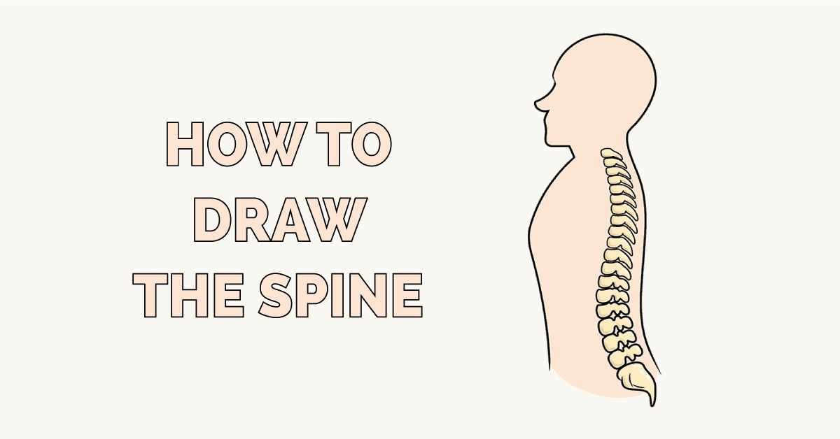 How to Draw the Spine Featured Image