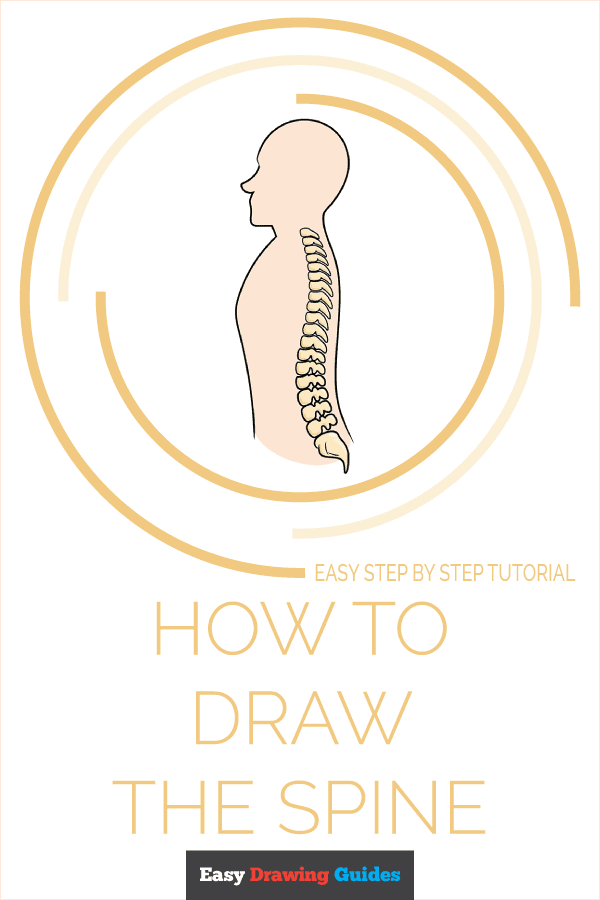 How to Draw the Spine Pinterest Image