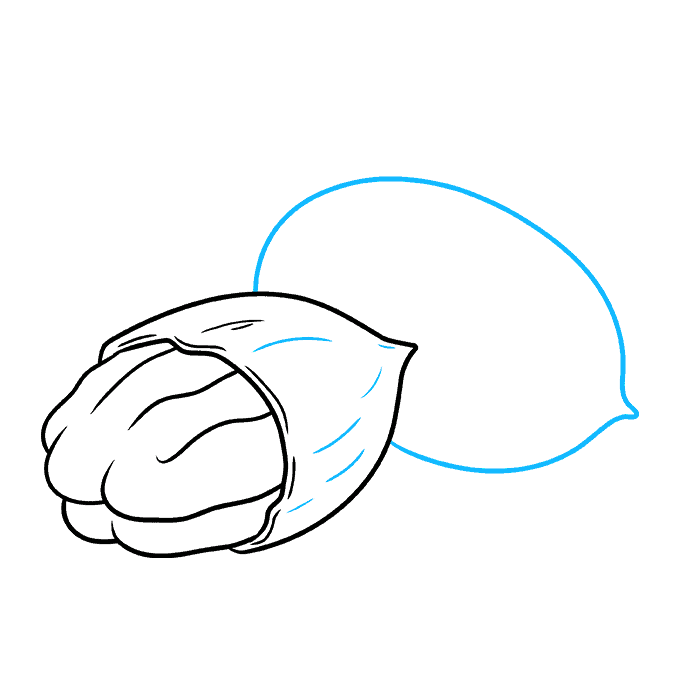 How to Draw Pecan Nuts Step 04