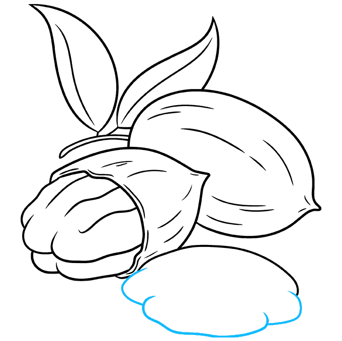 How to Draw Pecan Nuts Step 08