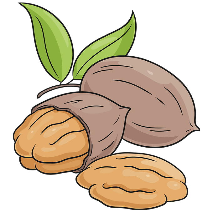 How to Draw Pecan Nuts Step 10