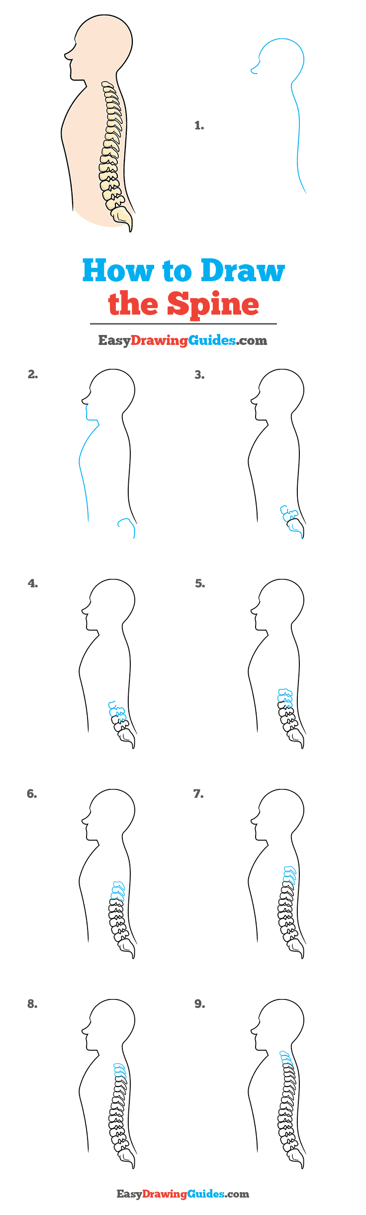 How to Draw the Spine Step by Step Tutorial Image